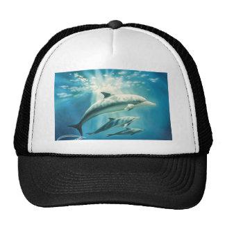 Dolphin Trio Cap