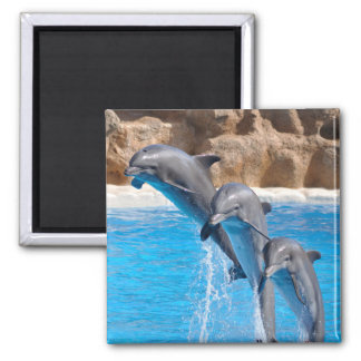 Dolphin Water Beach Tropical Paradise Island Fish Square Magnet