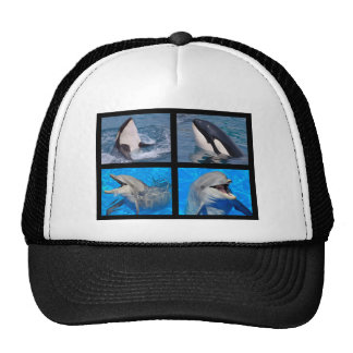 Dolphins and killer whales cap