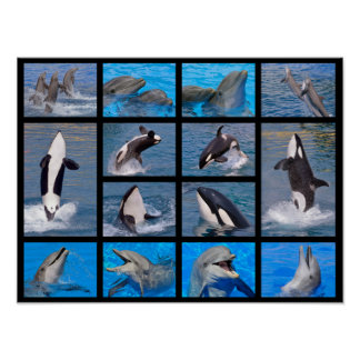 Dolphins and killer whales poster