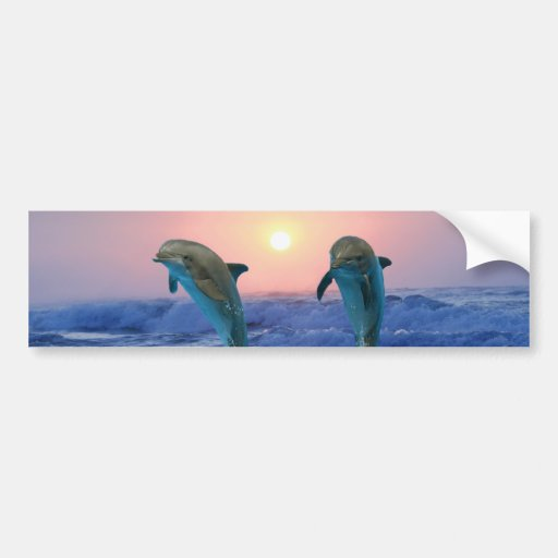 Dolphins at sunrise bumper sticker
