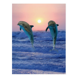 Dolphins at sunrise postcard