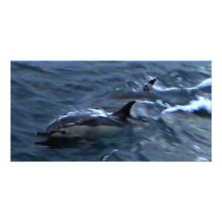 Dolphins at the boatside photo card template