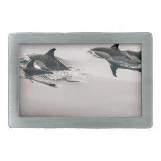Dolphins Belt Buckles
