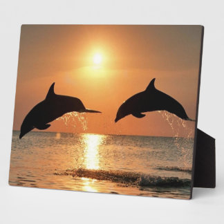 Dolphins by Sunset Photo Plaque
