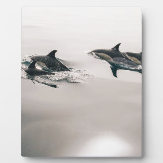 Dolphins Display Plaque
