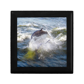 Dolphins Followings Boat Gift Box