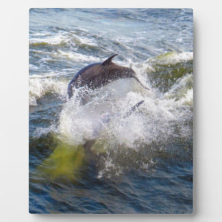 Dolphins Followings Boat Plaque