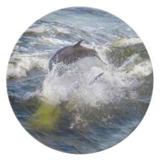 Dolphins Followings Boat Plate