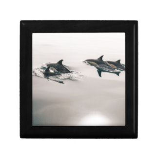 Dolphins Gift Box