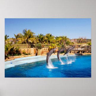 Dolphins Jumping At Ushaka Marine World, Durban Poster