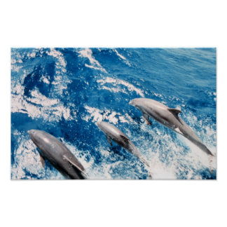 Dolphins Jumping Poster