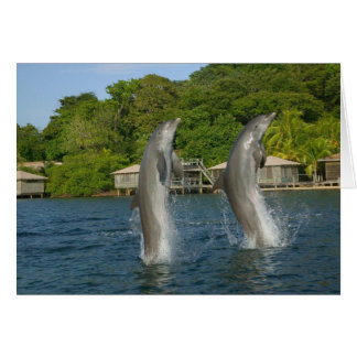 Dolphins jumping, Roatan, Bay Islands, Card