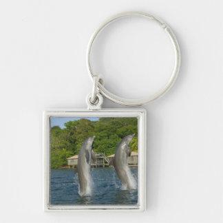 Dolphins jumping, Roatan, Bay Islands, Key Ring