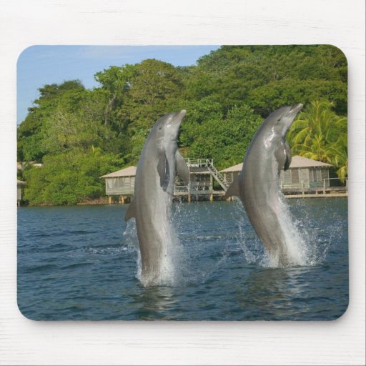 Dolphins jumping, Roatan, Bay Islands, Mouse Pad