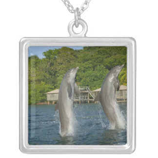 Dolphins jumping, Roatan, Bay Islands, Silver Plated Necklace
