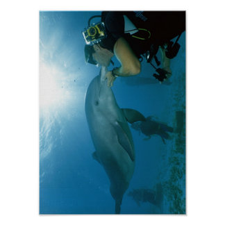 Dolphins Kiss Poster