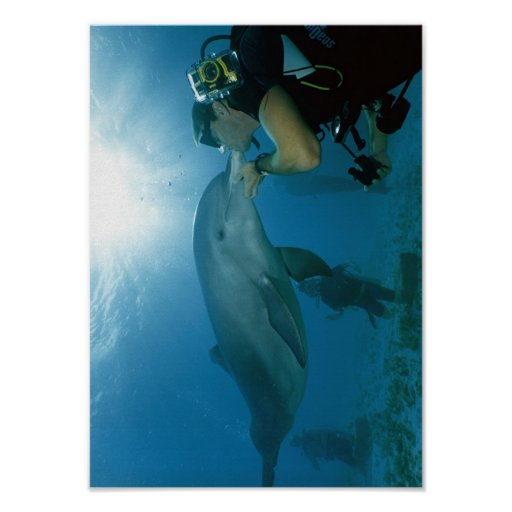 Dolphins Kiss Posters