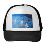 Dolphins Lovers Hats
