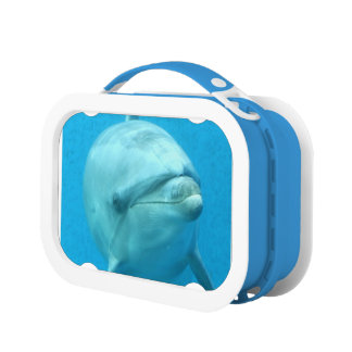 Dolphins Lunch Boxes