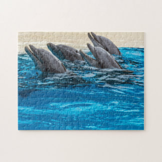 Dolphins photo puzzle