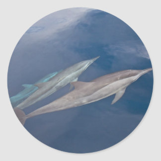 Dolphins Round Stickers