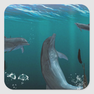 dolphins square stickers