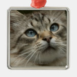 Domestic cat christmas ornament