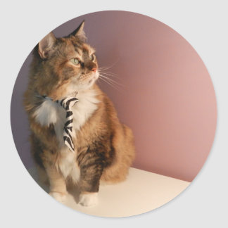 Domestic cat in a business Tie pic 2 Round Sticker