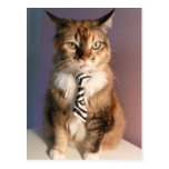 Domestic cat in a business Tie Postcard