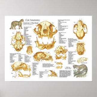 Domestic Cat Skull Anatomy Poster