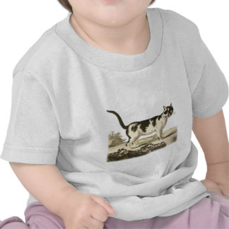 Domestic Cat T-shirt
