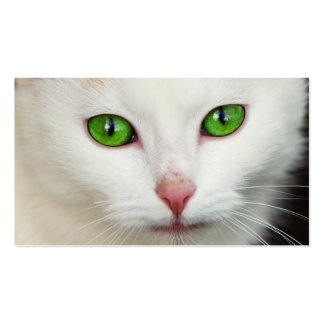 Domestic Cat with Green Eyes Feline Face White Fur Business Card Template