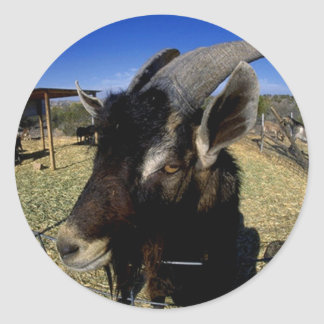 Domestic Goat Classic Round Sticker