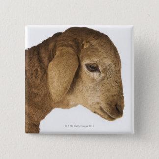 Domestic lamb 15 cm square badge