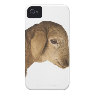 Domestic lamb iPhone 4 Case-Mate cases
