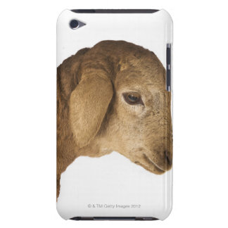 Domestic lamb iPod touch Case-Mate case