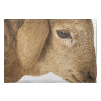 Domestic lamb placemat