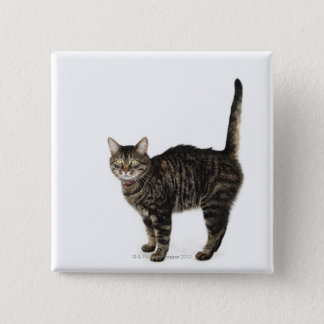 Domestic male tabby cat standing 15 cm square badge