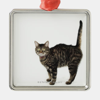 Domestic male tabby cat standing christmas ornament