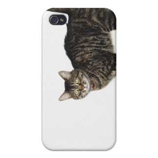Domestic male tabby cat standing iPhone 4 covers