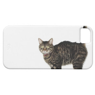 Domestic male tabby cat standing iPhone 5 covers