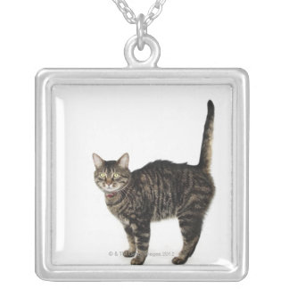 Domestic male tabby cat standing necklaces