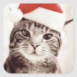 Domestic tabby cat wearing red Christmas hat Square Stickers