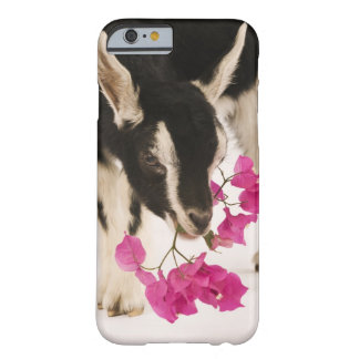 Domesticated British Alpine goat (kid). Black Barely There iPhone 6 Case