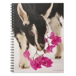 Domesticated British Alpine goat (kid). Black Notebook