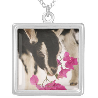 Domesticated British Alpine goat (kid). Black Silver Plated Necklace