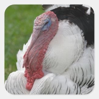 Domesticated Turkey Square Sticker
