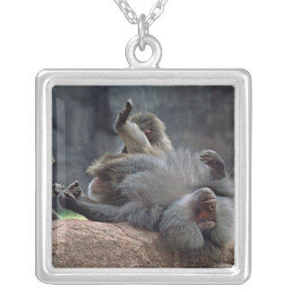 Dominant male Hamadryas baboon being groomed, Silver Plated Necklace