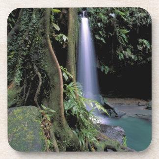 Dominica, Emerald Pool, Waterfall. Beverage Coaster